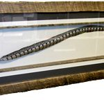 Shadow Box Feather